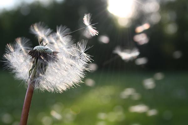 Marien Apotheke Pollenflugvorhersage